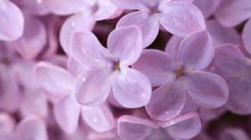 Salvia, calendula e tarassaco. I fiori nuova via dell'alimentazione