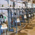Quote latte, Cia: i problemi per gli allevatori restano irrisolti