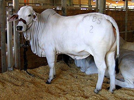 Quote latte, Via libera in Commissione Agricoltura al decreto