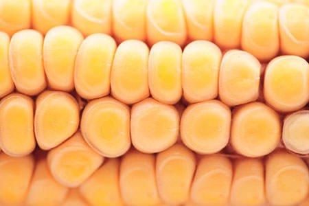 Maltempo: campagne allagate, devastati frutteti e coltivazioni d'ortaggi, a rischio la produzione di mais