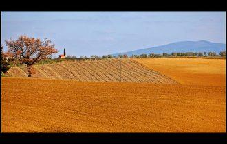 Francia: Il reddito agricolo crolla del 34%