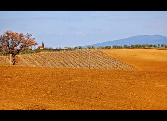Corte di giustizia UE: uno Stato non può bloccare coltivazioni OGM