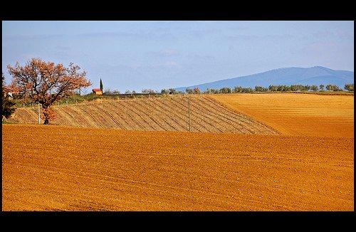 OGM sì, OGM no: Allevatori e agricoltori tradizionali DOC in estinzione