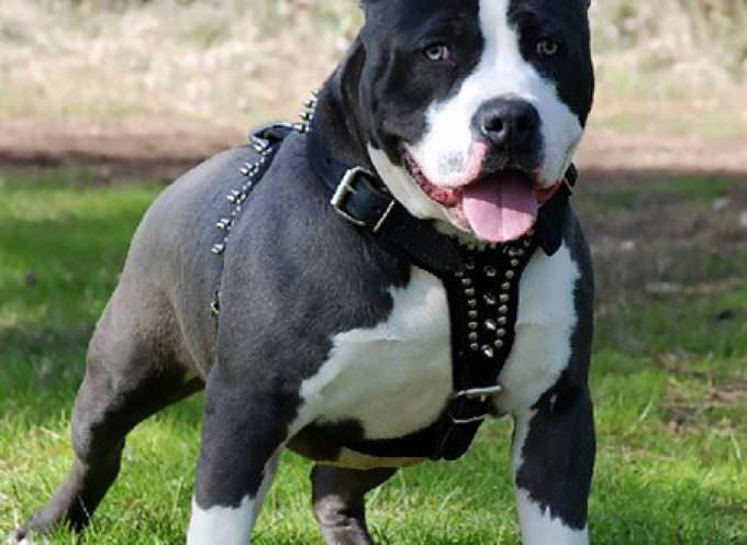 Salute: cani, nuove regole a tutela dell'incolumità pubblica