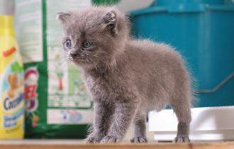 Assicurazioni: da Federfauna arrivano quelle per gli animali