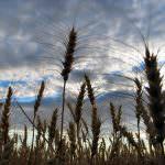 Agricoltura, Vergati (Confagricoltura): serve un nuovo dialogo tra banche e imprese del Made in Italy