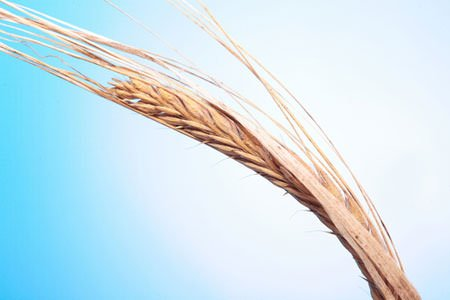 Coopératives agricoles : Domagri va fusionner avec Limagrain