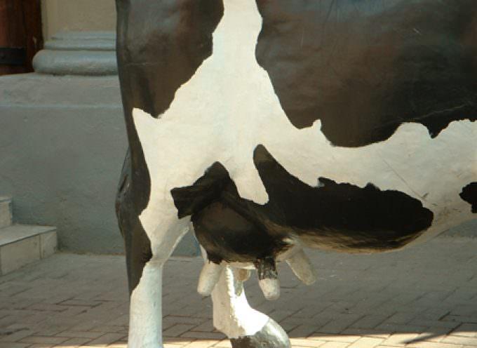 """Clonazione animale, la FSA: """"Carne e latte non sono dannosi"""""""