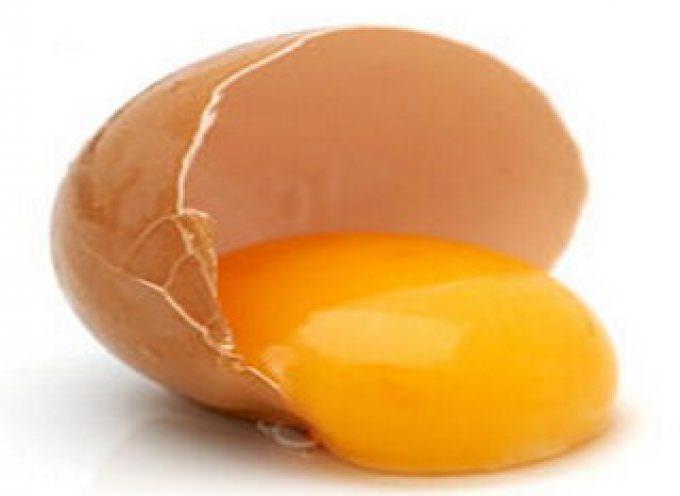 Cuore: peggio il tuorlo d'uovo che lo junk food