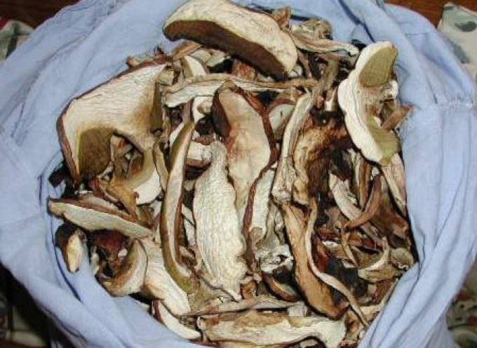 Tacchino con panna e funghi