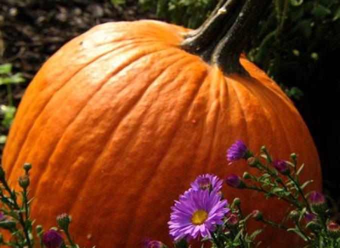 Halloween: Coldiretti, zucche a 1 euro/kg più per gola che paura