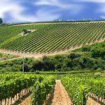Vino: Grazie alla tecnologia si possono ridurre gli insetticidi del 60%