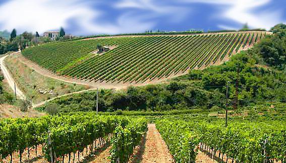 19 maggio, Festival del Vino a Nus (AO)