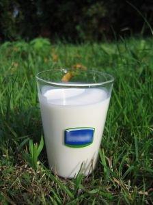 Il latte mantiene giovane il cervello