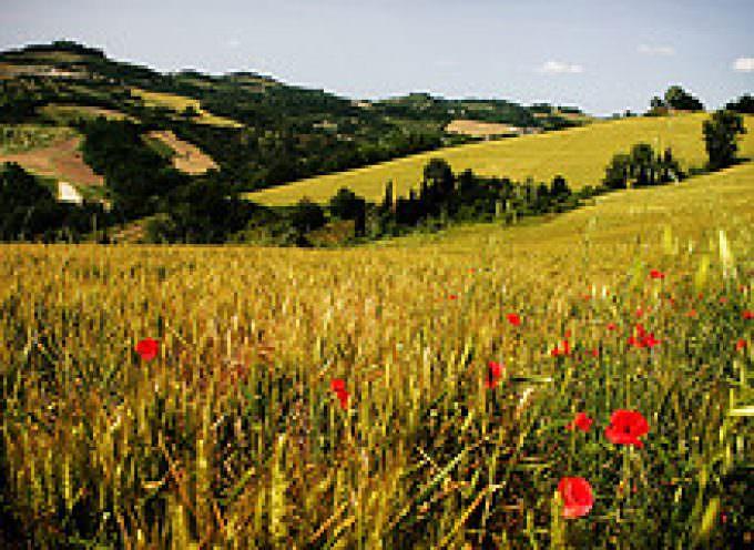 L'Italia ha il primato europeo per l'assenza di residui chimici negli alimenti di origine vegetale