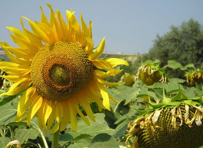 Contro la crisi agricola in Italia nascerà l'Associazione Nazionale Giovani Agronomi e Forestali (Angaf)