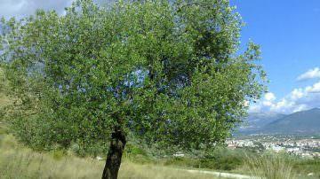 Dalla Puglia al Trentino: ecco il Girolio d'Italia