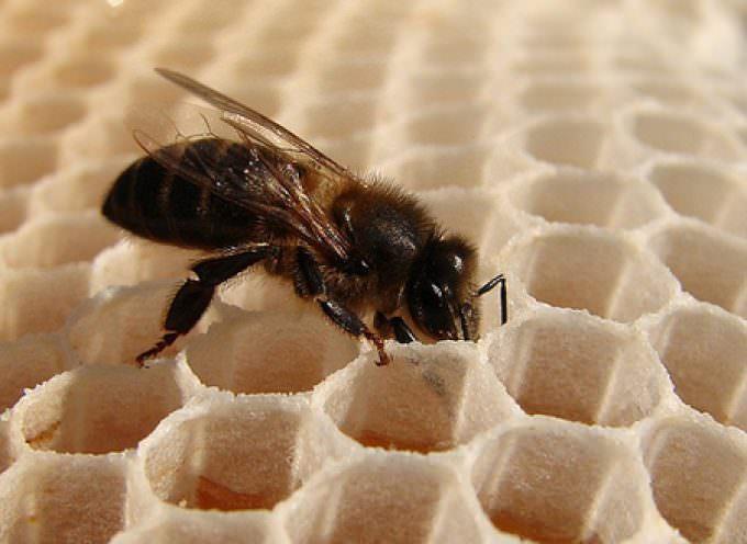 Ambiente, Coldiretti: fare chiarezza sulla scomparsa delle api in Italia (- 30 %)