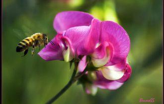 In California le api sono tornate spontaneamente