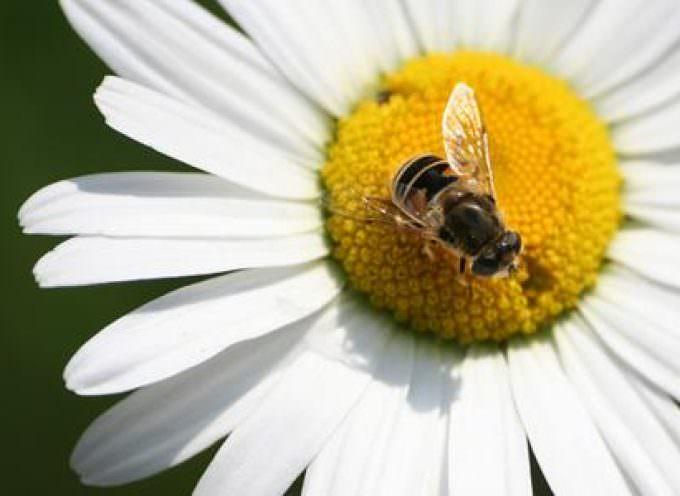 Primavere ed estati più lunghe e calde, ma a farne le spese sono le api