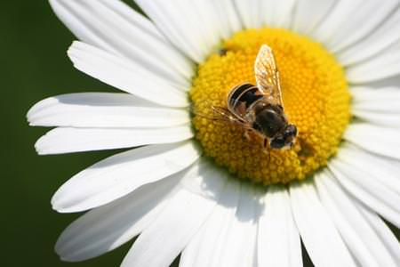 Moria delle api, il progetto Apenet sbarca in rete