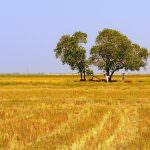 Ue: La politica agricola europea deve posarsi su un bilancio importante