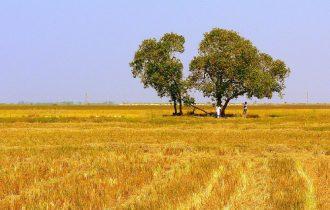 Basilicata: La Cia lancia l'allarme criminalità organizzata nel settore agricolo
