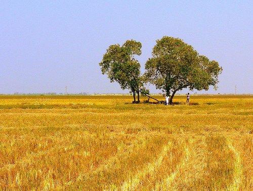 400 mila imprese agricole rischiano il fallimento