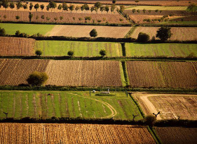 Le Agroenergie, opportunità da non perdere per i giovani agricoltori