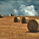 Vecchioni: Strategia di filiera per zootecnia e cereali