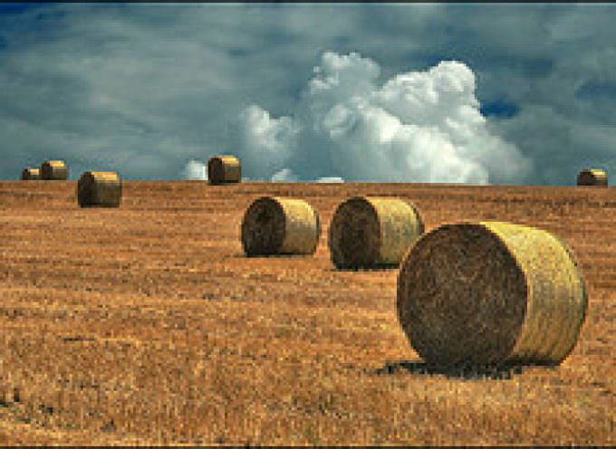 Russia: Torna ad impennarsi il prezzo del grano