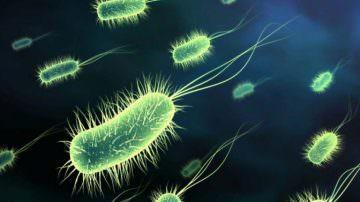 Probiotici, una bionavicella per arrivare meglio all'intestino
