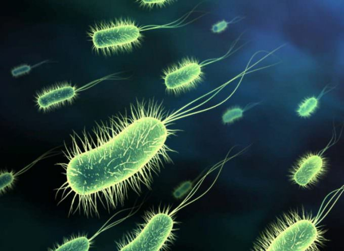 Probiotics Found to Block Pneumonia in Critically Ill Patients