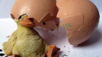 Sicurezza alimentare, obbligatoria l'etichettatura d'origine per carne, uova e latte