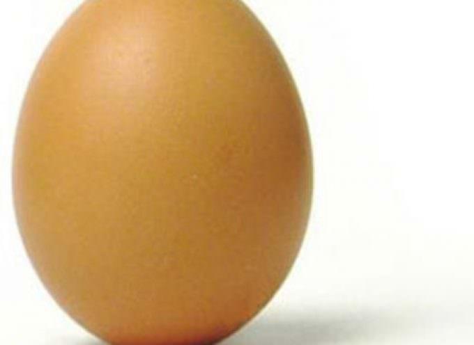 Cina. Il mistero delle uova che rimbalzano