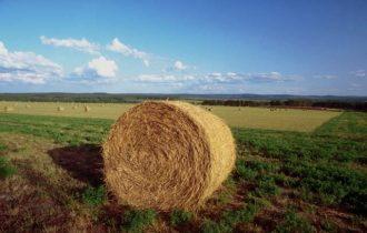 'Land grabbing': Un caso a Cigliano, nella provincia di Vercelli