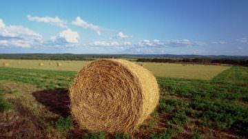 Agricoltura: l'emergenza resta, manca una seria politica