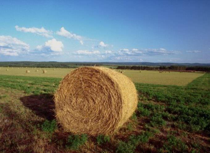 Confagricoltura: per l'agricoltura italiana un 2009 da dimenticare