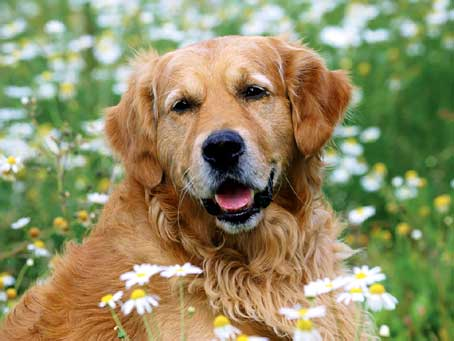 Cani, cambiano le regole a tutela dell'incolumità pubblica