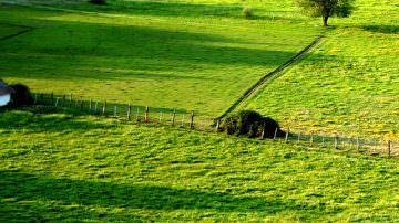 Toscana: Sviluppo agricolo? Serve una filiera appropriata