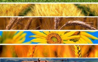 In agricoltura salari decentrati da oltre 10 anni