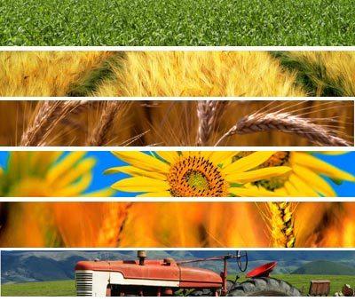 """Agricoltura: ogni impresa """"paga"""" alla burocrazia 7 mila euro l'anno"""