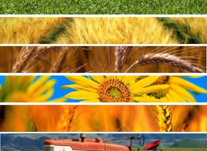 Rilanciare l'agroalimentare portando l'agricoltura al centro dei programmi
