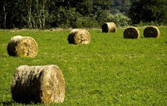 Agricoltura, aumentano i costi: +3,6% rispetto al 2011