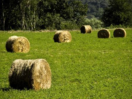 Lombardia: Garantite le agevolazioni contributive per l'agricoltura in zone montane e svantaggiate