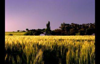 Agricoltura: Sacconi apre alla bilateralità, la Uila concorda col Ministro