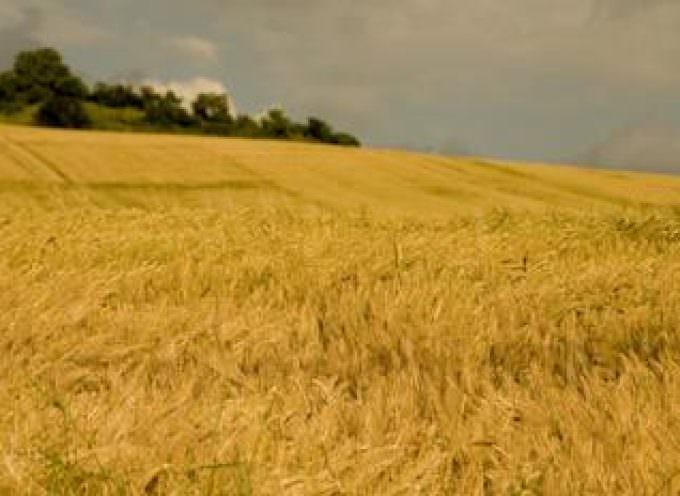 Imprese agricole in profonda crisi nella morsa di vertiginosi costi