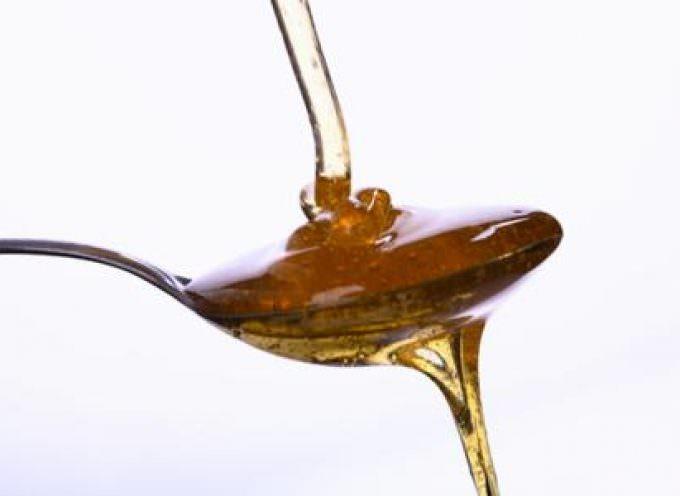 Festival del miele: Convegni, spazi didattici, visite guidate e vendita dei prodotti dell'alveare