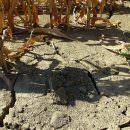 Ogni giorno si perdono 23 ettari di terreno coltivabile