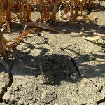 Crisi, entro il 2050 a rischio un quarto della produzione alimentare mondiale